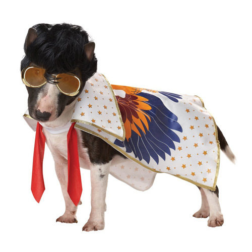 Pup-A-Razzi Rock N Roll King Dog Costume