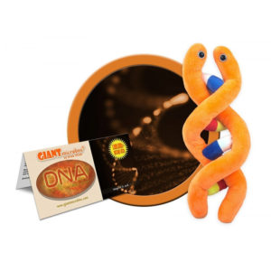 DNA (Deoxyribonucleic Acid) Educational Plush by GIANTMicrobes
