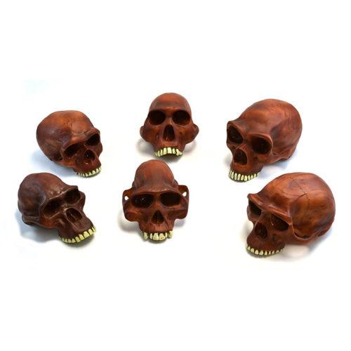 "Eisco Labs 10"" Prehistoric Skull Replicas Set of 6"